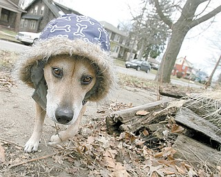 Volunteers helped North Side resident and pet owner Rik Blake clean up his property despite brisk winds and low temperatures.