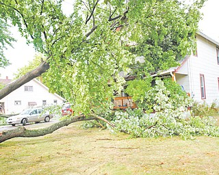 Fallen trees and downed power lines kept police and fire crews in the Valley busy after a brief but strong storm blew through the area just before 6 p.m. Sunday. The tree at left fell onto a house at 211 S. Schenley Ave. during the storm. There were no reported injuries.