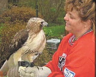 """Heather Merritt of Warren, who rehabilitates birds of prey and waterfowl, shows off one of the raptors that is part of her program. Her birds will be part of the fascinating """"Birds in Flight"""" program set for Heritage Day in Niles, from noon to 5 p.m. Aug. 5."""