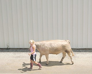 """Walking her steer as she will compete for the last time in 4-H is Taylor Cope of Leetonia and """"tucker""""  -  Columbiana Fair  est 1845 The Columbiana Fair is again on till Aug 5 -"""