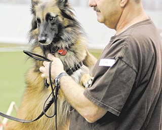 Rick Oberndorf of Pittsburgh pets his 4-year-old Belgian Tervuren, Callie, during the AKC-sanctioned dog agility trials at the Mayor Ralph A. Infante Wellness Center in Niles on Sunday. About 450 dogs were entered in the event.