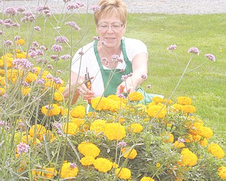 Mary Grace Fowler of Boardman is chairwoman of the Holborn Herb Growers Guild. The guild tends to two public gardens, one in the Western Reserve Village at the Canfield Fairgrounds and the other at Boardman Park.