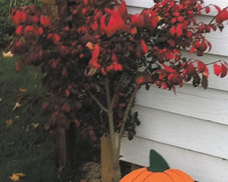 Here's a photo of a Red Burning Bush sent in by Cathy Hinderliter of Canfield.