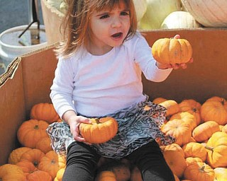 "We received this picture of Sophia Testa, 22 months, enjoying the treasures of fall (taken by her ""favorite nanny Pretty Britt"")."