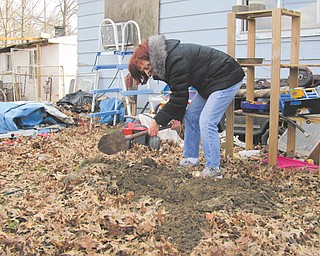 Debbie Agostinelli, shelter director for the Animal Welfare League of Trumbull County, digs in the backyard of the house at 2518 Hamilton St. SW, Warren, in a spot of fresh dirt to check for dead animals.