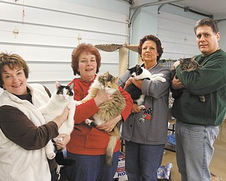 Second Chance Animal Rescue is sponsoring its 13th Annual Night at the Races on Saturday at the Saxon Club. From left, holding a few of the rescued cats, are Lori Osborne, Helen Dolak, Jo Ann Barrows and Gordy Morgan. PHOTO BY ROBERT K. YOSAY | THE VINDICATOR