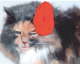 Nutmeg sports a red bow. Photo by Lana VanAuker of Canfield.