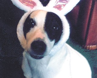 Sunny Osman of Boardman sent this picture of her Jack Russell terrier, Sparky.
