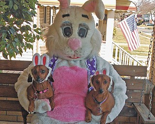 Amanda Zagorsky is the bunny, and she is holding Bella and Jude.......