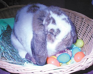 French Lop Dew was sent by the Zedakers of Hubbard.