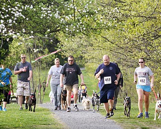 MADELYN P. HASTINGS | THE VINDICATOR  Over 150 people participated with their four legged friends at the 1st annual Tails on Trails 5K walk at Austintown Township Park. All proceeds benefit Friends of Fido Mahoning County Dog Pound.