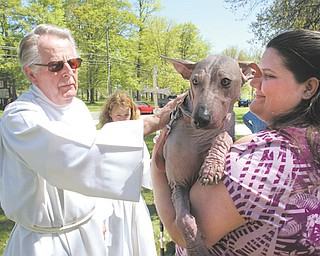 The Rev. Erwin Smuda, interim rector at St. James Episcopal Church in Boardman, blesses Roxie, a Mexican hairless, during Sunday's Blessing of the Animals. At right is Roxie's owner, Cynthia Parkhurst of Boardman.