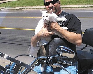 SPECIAL TO THE VINDICATOR West Side Cats is preparing for its second annual motorcycle poker run July 21 at Austintown Park. Dave Childers sits on his bike with Smoochie, one of many rescued cats and kittens. Vendors who sell motorcycle-related items, pet-related items, crafts, art and more are needed. Vendors will pay $15 for each 10-by-10-foot space. Donations are being sought for new items and gift cards for gift baskets that will be raffled at the event. Three bands will perform, baskets will be auctioned, and there will be a 50-50 raffle. Food also will be available. Space fees and small items may be dropped off at the shelter during adoption hours from 3 to 7 p.m. Tuesdays through Fridays and from noon to 6 p.m. Saturdays. For information call 330-519-5002.