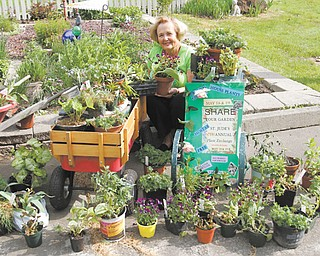 Peggy Potts is surrounded by some of the plants that will be offered at the 10th annual plant exchange and giveaway this weekend at St. Jude Church, 180 Seventh St., Columbiana. She and Doris Daniszewski began the pass-along plant project 10 years ago. At top, perky pots of pansy plants will make another gardener smile.