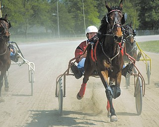 Jim Criss, center, takes an early lead with Zing Zing during Sunday's harness races at the Canfield Fairgrounds. The event was for inexperienced horses to try racing.