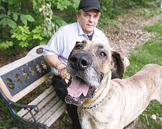 Dave Nelson, acting Mahoning County dog warden, waits with a Great Dane that is part of a bite case and is quarantined for 10 days. Nelson said Tuesday that dog-bite incidents can involve both the dog warden's office and the health department. This week is Dog Bite Prevention Week.