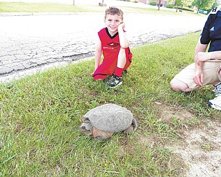 SPECIAL TO THE VINDICATOR Snappy, a turtle so dubbed by Benjamin Oddis of Boardman, above, came out of his shell to make a new pal. Judging by the look on Benjamin's face, it made his day. On Sunday, the boy and his parents, Kris and Will Oddis, had found Snappy roaming on Trailwood Drive. Neighbors joined in and helped get him off the road and eventually into a box, which the Oddis family took home. Benjamin cared for the snapping turtle by spraying him with water from a squirt bottle. The family released him near a creek on their property, and to their delight, Snappy made himself at home by burrowing into the cool mud.