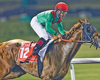 American trained Animal Kingdom, winner of the 2011 Kentucky Derby and the 2013 Dubai World Cup, will chase one more win today at the prestigious Queen Anne Stakes at Royal Ascot in England before he is set to retire to stud.