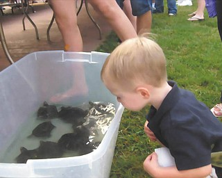 SPECIAL TO THE VINDICATOR Youngstown Lions Club's 92nd Annual Turtle Derby will begin at 6:30 p.m. Monday in downtown Lowellville by the gazebo on Water Street. Cole Cuffle is checking out some of the turtles. Turtles will race and there will be a basket auction, games and prizes for the kids, food and a car show. The Lions hope to raise $30,000 this year. Proceeds are used to benefit the community. For information call 330-503-0777.