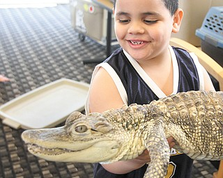 Jose Perez, 6, doesn't appear to mind holding this alligator at the presentation.