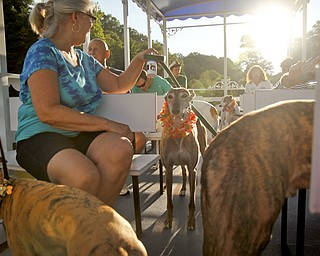 MADELYN P. HASTINGS | THE VINDICATOR..Dogs and their owners enjoyed a Yappy Hour paddle boat ride on Lake Glacier on Friday, August 9, 2013. ... - -30-..