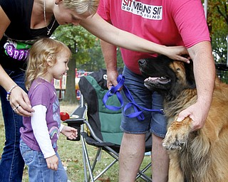 MADELYN P. HASTINGS | THE VINDICATOR..(L-R) Ashley Lisk and her daughter Kori Carlon, 3, of Boardman get permission by dog trainer Ken Kemmer to pet the two year old leonberger pup, Loki, at 'Sit Means Sit' booth at the Fall Festival at Stevens Park in Niles on Saturday, October 5, 2013. ... - -30-..