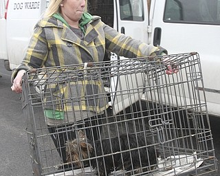Kayley Frost carries 1 of the 105 dogs confiscated during the raid of Terri Wylie's Smith Township property Jan. 17, 2014.