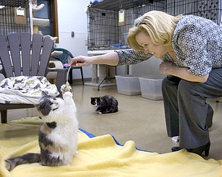 Kelli Cardinal/The Vindicator.Sandi Cestone, from Canfield, plays with Jessica, a Dilute Calico, while deciding on adoption Monday night at Second Chance Animal Rescue in Austintown.  Cestone adopted her last cat from Joann Barrows 14 years ago.