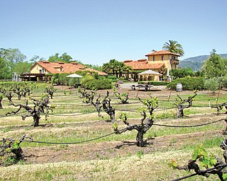 Brian Fry's trip to California wine country included a stop at White Oak Winery in Sonoma County.