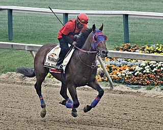 Exercise rider Domingo Navarro runs Preakness entrant Social Inclusion during a workout Thursday at Pimlico Race Course in Baltimore. The colt has only three career wins, but a win in Saturday's race would make his trainer, 85-year-old Manny Azpurua, the oldest trainer to saddle a Preakness winner.