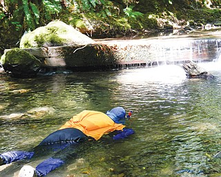 A California Department of Fish and Wildlife diver conducts an underwater survey to count young salmon and steelhead fish in a tributary. Some drought-stricken rivers and streams in Northern California's coastal forests are