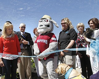 ROBERT K. YOSAY  | THE VINDICATOR.. .Caryn Covelli ( board) Dr Jeff Williams -President- Scrappy - Kerry S. Pettit- Ex Director- Ali Patterson -  and Nancy Jastatt-Juergens -  both board members ( ricoh  the cat) ..Animal Welfare League of Trumbull county ribbon cutting on Belmont Ave across from Squaw Creek in Vienna.