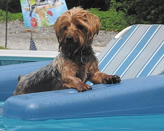 Rodney Siembieda of Youngstown is enjoying his day in the pool on his favorite raft. The photo was taken by his mommy and daddy, Dana and John Siembieda. Sent by Dana.