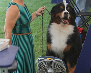 """Karen Mammano of Webster, NY sits in front of a fan to stay cool with her 8-year-old Bernese Mountain Dog named """"Justin"""" during the AKC All-Breed Dog show at the Canfield Fairgrounds on Saturday morning.  Dustin Livesay  