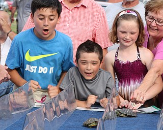 William D. Lewis/The Vindicator The 55 th annual Turtle Races sponsored by the Youngstown Lions Club were held in Lowellville Monday June, 20,2016. Urging their turtles to victory are from the left: Fortunato Rivera Ocasio, 10, of Youngstown, Justin Latusick, 7, of Lowellville and Korynne Shannon, 7, of New Castle and her grandmother Paulette Muscarella of Pulaski.
