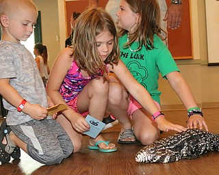(L-R) Jimmy (4), Jamie (8) and Madeline (10) Kagarise of Youngstown pet a Black and White Tegu during the Reptile and Amphibian show at the Mill Creek Farm in Canfield on Sunday afternoon.   Dustin Livesay     The Vindicator  8/6/17  Canfield
