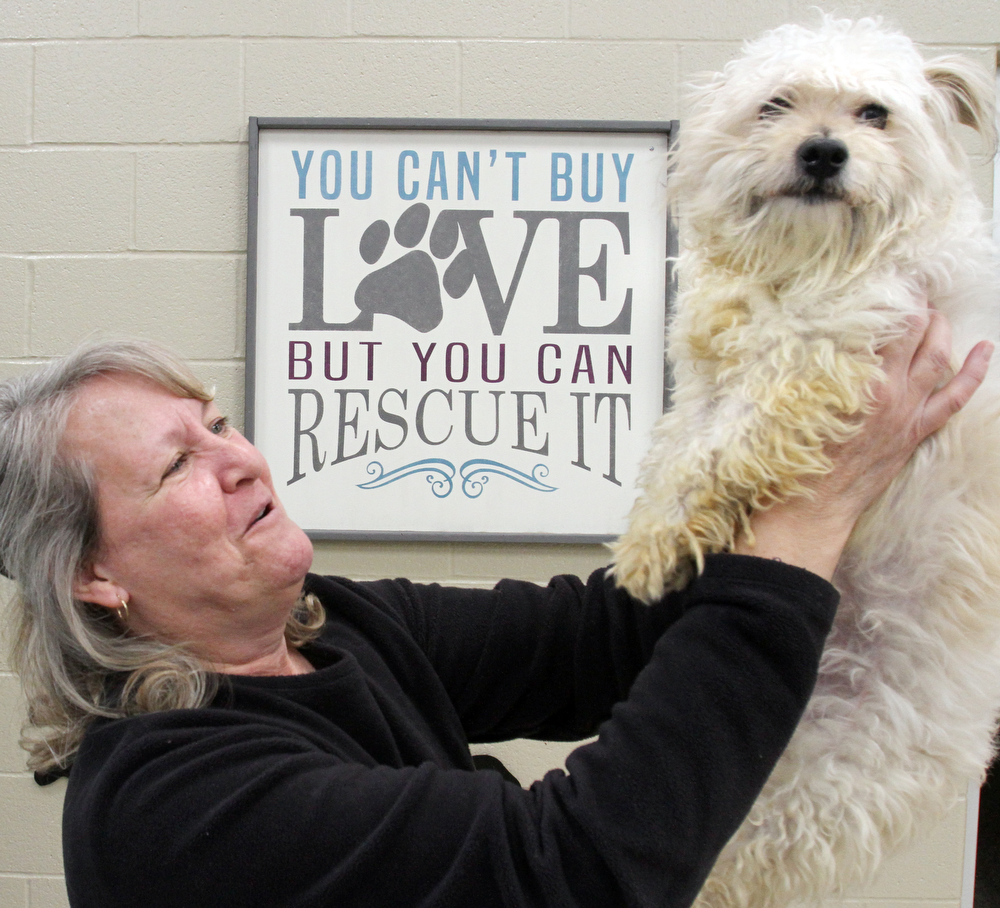 William D. Lewis the vindicator  Trish Collins of Poland and Friends of Fido president shares a moment with Chad, a Maltese mix at the Mahoning County Dog Pound 1-19-18.