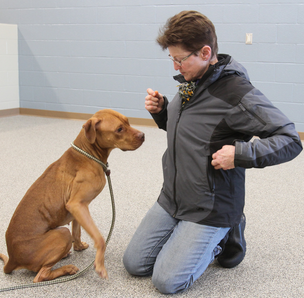 William D. Lewis the vindicator   Janet Miklas of Austintown and a Friends of Fido volunteer shares a moment with Ellen, a dog at the Mahoning County Dog Pound 1-19-18.