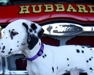 Fire house mascot Daisy poses for a photo on a Fire Truck, Friday, Jan. 26, 2018, at the Eagle Joint Fire District in Hubbard...(Nikos Frazier | The Vindicator)