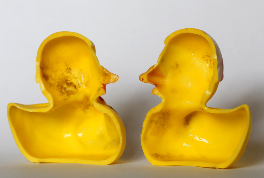 "The March 27, 2018, photo shows the inside of a rubber duck after it was cut open for the photo in Nauen, Germany. Swiss researchers say the cute, yellow bath-time friends harbor a dirty secret: Microbes are swimming inside. The Swiss Federal Institute of Aquatic Science and Technology says researchers turned up ""dense growths of bacteria and fungi"" on the insides of toys such as rubber ducks and crocodiles."