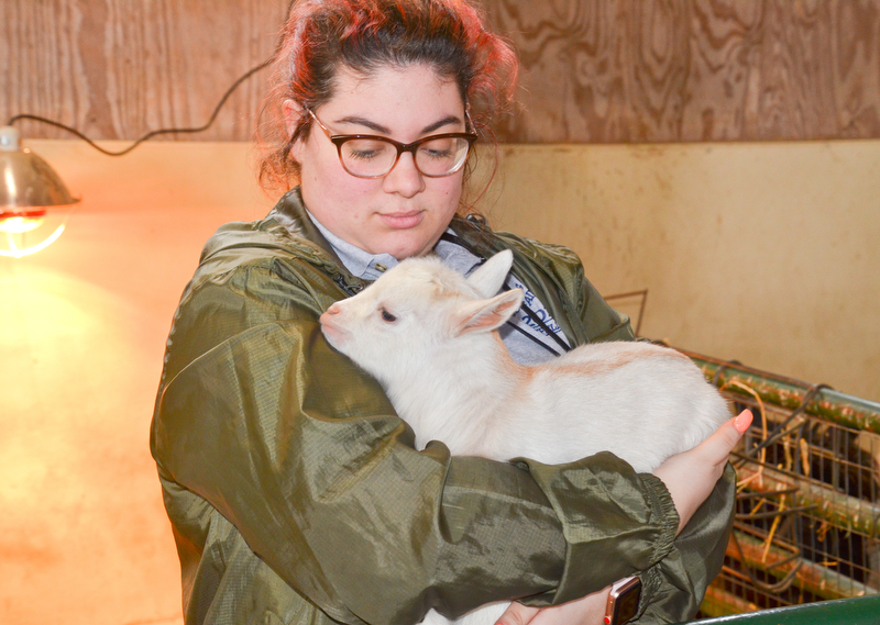 Natalie DelSignore, a volunteer with Jr. Fair Board, from Poland, had the job of holding a baby goat so others were able to pet him at Mill Creek MetroParks' annual Farm Animal Baby Shower at the MetroParks Farm in Canfield on Sunday April 8, 2018.