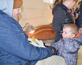 Luke Stambaugh, 2, was excited to see a baby goose up close at Mill Creek MetroParks' annual Farm Animal Baby Shower at the MetroParks Farm in Canfield on Sunday April 8, 2018.  The goose was held by Jacob Corll, a volunteer from Berlin Center.  Stambaugh was brought the the event by his parents Josh and Jessica Stambaugh, and sisters Lelayla, 5, and Ella, 7, of Tallmadge, Ohio.