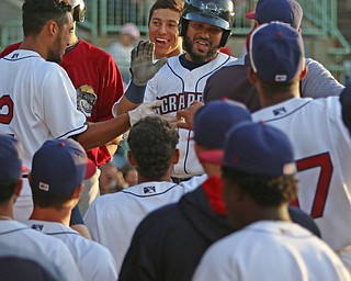 Scrappers catcher Jason Rodriguez (middle) gets greeted by his teammates as he returns to the dugout after hitting a solo home run in the bottom of the third inning during Monday evenings matchup against the Williamsport Crosscutters at Eastwood Field in Niles.