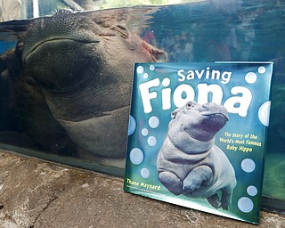 "In this June 26, 2018, photo Fiona, a baby Nile Hippopotamus, sleeps in her enclosure beside a copy of ""Saving Fiona,"" posed for a photograph at the Cincinnati Zoo & Botanical Garden, in Cincinnati. The Cincinnati Zoo's globally famous premature hippo does more than help sell T-shirts, bobbleheads and ice cream. She is becoming a teaching tool in classrooms and libraries and subject of a series of books with the latest by the zoo's director Thane Maynard. (AP Photo/John Minchillo)"