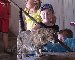 Neighbors | Jessica Harker.Riley Pieren pet the barn yard cat while touring one of the barns at the MetroParks Food Quest camp.