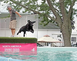 ROBERT K.YOSAY  | THE VINDICATOR..Joe Johnson of  Michigan..watches his 3 yearold at the dock diving practice runs Thursday..In celebration of its 27th anniversary, the Steel Valley Cluster will present four American Kennel Club all-breed dog shows Thursday through Sunday at the Canfield Fairgrounds..-30-