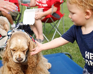 Owen Moore, 1, of Boardman pets Master Milo, a dog with the Sit Means Sit training program at the Hot air balloon festival at Mastropietro Winery on Sunday..