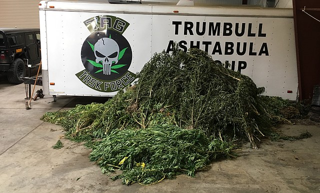 These illegally grown marijuana plants were taken from several locations in Trumbull and Mahoning counties, including crop fields, remote wooded areas and private property. The plants will be destroyed once a destruction order is obtained through Trumbull County Common Pleas Court.