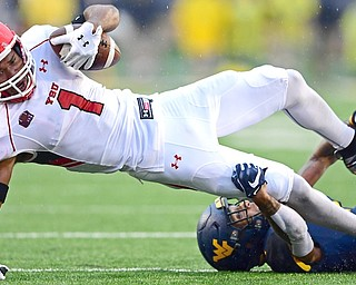 Youngstown State's Zach Farrar (1) is tackled by West Virginia's Derek Pitts Jr. during the first half of a game Saturday night at Milan Puskar Stadium in Morgantown, W.Va. The Mountaineers beat the Penguins, 52-17. Farrar finished with six catches for 135 yards.