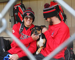 William D. Lewis The Vindicator YSU Baseball players Web Charles, left, and Jeff Wehler with Ali, a dog the tean adopted after it showed up at a recent practice. Charles is keeping the dog at his home.